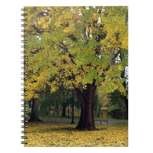 Ginkgo Tree in the Fall Spiral Note Book  #school #journal