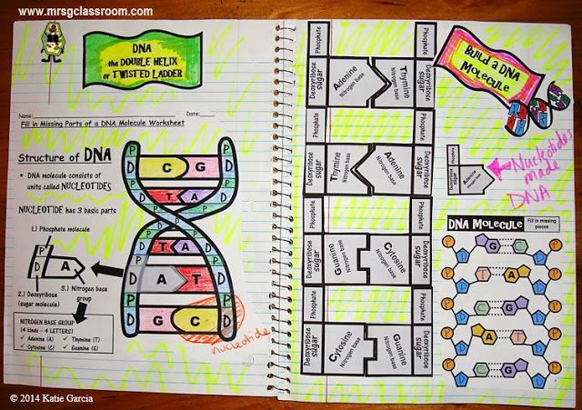 DNA - science interactive notebook