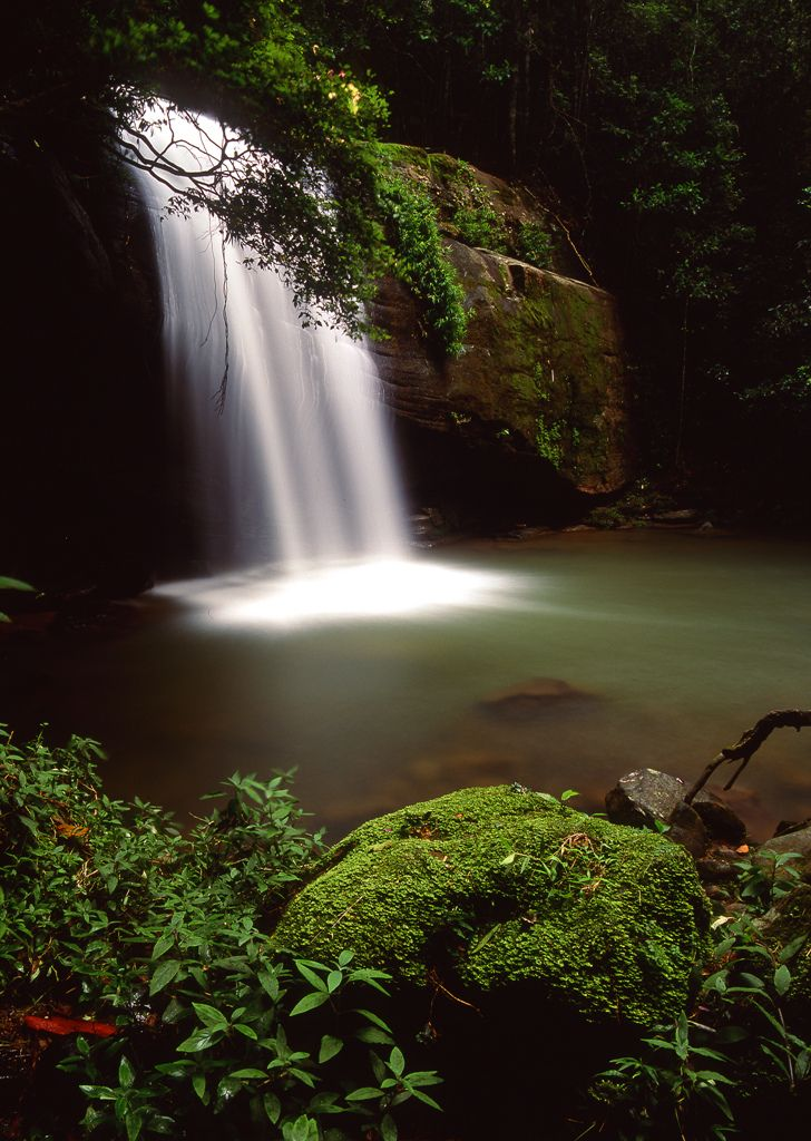 Serenity Falls, Buderim Forest Park, Queensland, Australia managed by Maroochy Shire Council