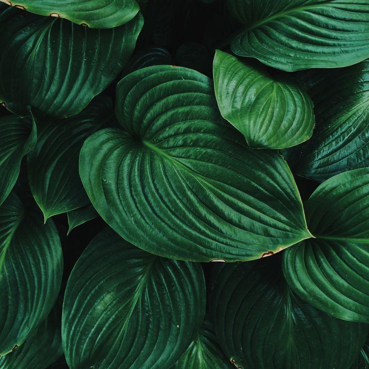 зеленые картинки инстаграм
