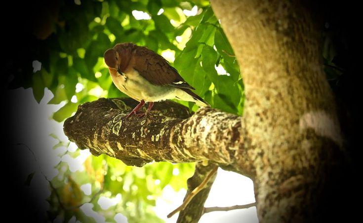 Pigeon2 by Attila Molnar
