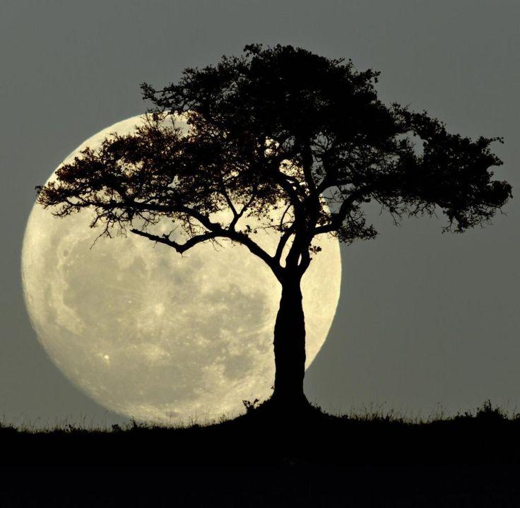 92 Prozent der Deutschen glauben, dass der Mond ihr Leben direkt beeinflusst