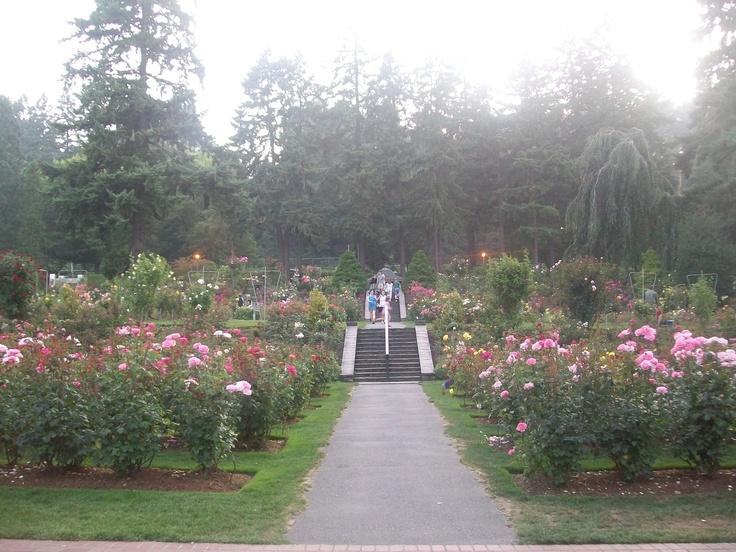 17 Best Images About Terraced Rose Garden On Pinterest Parks Portland And Sloped Yard