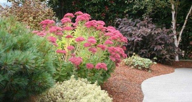 Combinar plantas de otoño, 6 estrategias - Jardinería