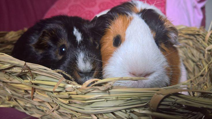 Amara and Ruby.