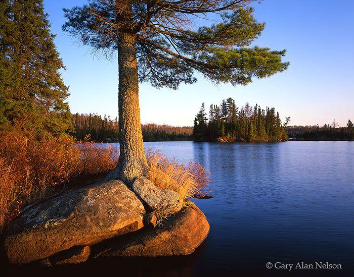 White Pine on Burnt Lake Boundary Waters Canoe Area Wilderness, Minnesota MN-03-6-BW White pine framing crowded island on Burnt Lake, Boundary Waters Canoe Area Wilderness, Minnesota. Photo © copyright by Gary Alan Nelson.