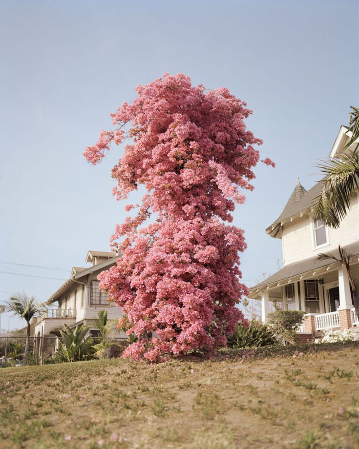 Gregory Halpern - like the warm feel of this image and how the houses a there they complete the image