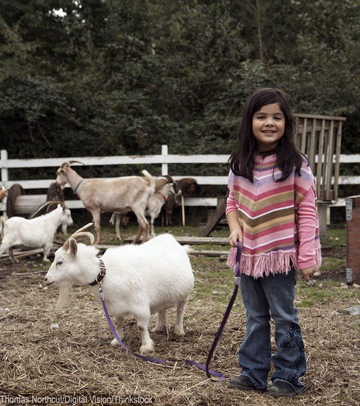 778 Best Goat Farm Images On Pinterest: Best 25+ Hobby Farms Ideas On Pinterest