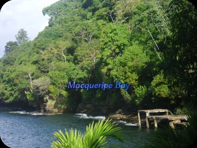 1000+ Images About All Trinidad And Tobago- My Homeland