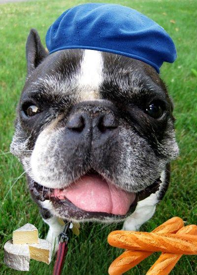 Vive la France!~French Bulldog~♛