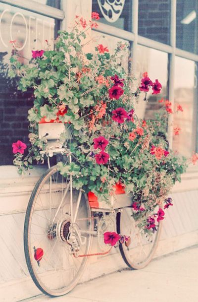Still Life Photography, Bicycle Photo, Flowers