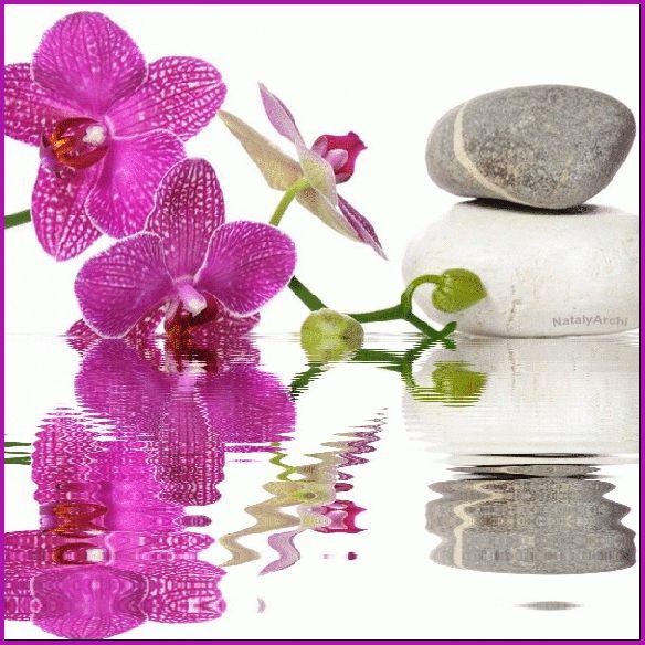 Орхидея - Цветы