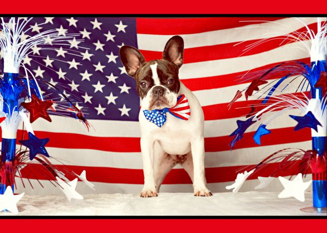 Happy Fourth Of July French Bulldog American Flag Humorous Card Ad Affiliate July French Happy Pet Insurance Cost Sick Pets Best Pet Insurance