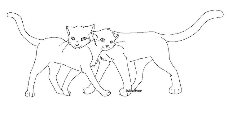 Warrior Cats Couple Guess This Is How Cats Hug