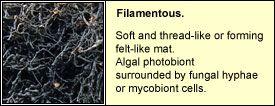 filamentous