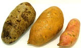 Difference between sweet potato and yam. I really always thought they were the same thing
