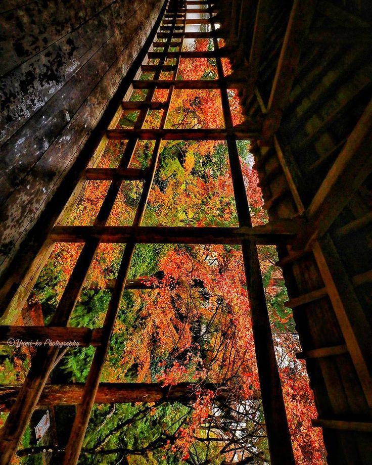 寝かせてだめなら起こしてみろ . . なんて諺はありませんが 京都のとある橋で撮影した紅葉 ホントは横向きの物を縦にしてみました(笑) . ⚠撮影禁止になった東福寺の橋ではありませんのでご安心を . . Location: 京都府 Kyoto, Japan . #京都 #紅葉 #橋 #雨 #ig_today #igglobalclub #ig_dynamic #ig_worldclub #curatethis1x #picturetokeep_nature #loves_asia #loves_united_asia #bns_asian #7flowers_1day #ig_photosentez #main_vision #jal東京カメラ部2017japan #jal東京カメラ部2017旅 #ファインダー越しの私の世界 #写真好きな人と繋がりたい #jhp秋色 #team_jp_春夏秋冬2016 #nature_brilliance #excellent_nature #picture_to_keep #worldmastershotz_asia #そうだ京...