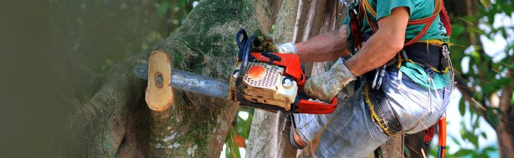 Tree Lopping – An Essential Part of Yard Management #treelopping #treecutting