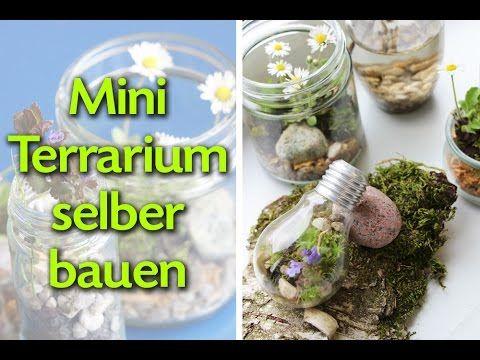 Mini Terrarium selber bauen - einfache und kostenlose Anleitung... Alles was man braucht findet man in der Natur.