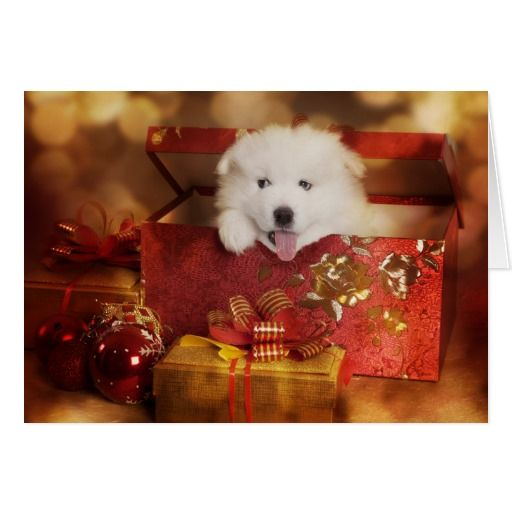 Samoyed Puppy In A Christmas Box Holiday Card | Zazzle.com  – Snow