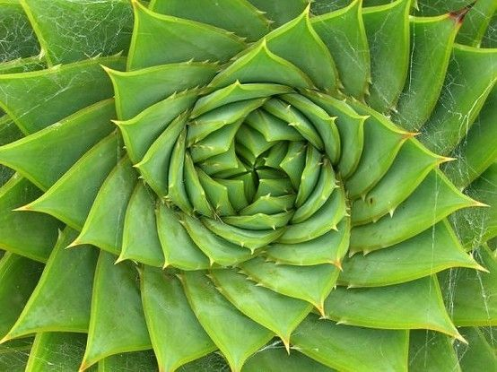 The Golden Ratio by sara