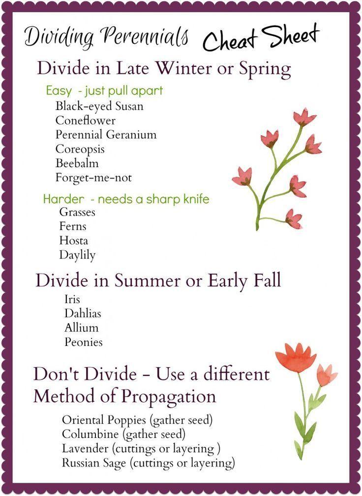 Dividing Perennials Cheat Sheet - http://gardenmatter.com