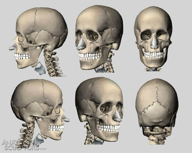 53 Best Head Anatomy Bible Images On Pinterest Human Anatomy Head