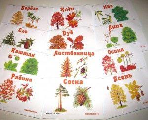 Самодельные книжки про каждое дерево