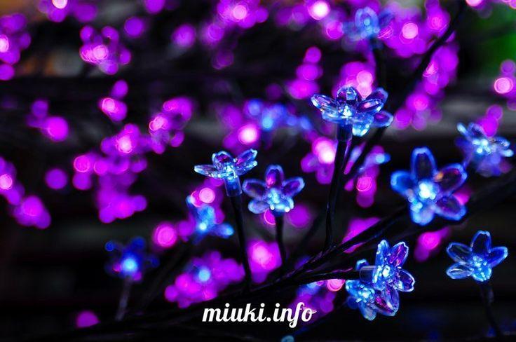Цветение сакуры в эпоху Hi-Tech