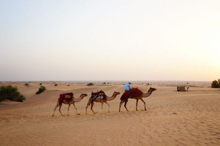 You can't go to Dubai without a camel ride in the desert!