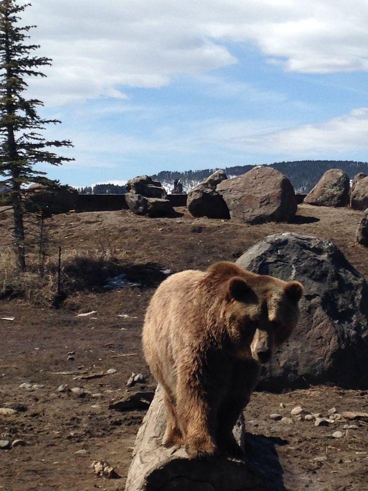 Grizzly Bear Pie Recipe — Dishmaps