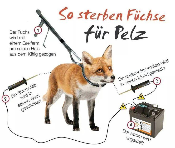 Teilt dieses Bild als Zeichen gegen Tierquälerei und um zu unterstreichen, dass Pelz nicht in eine fortschrittliche Gesellschaft gehört!