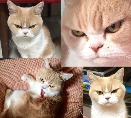 Angry cat? NO! I'm happy. It's true. No Lie.