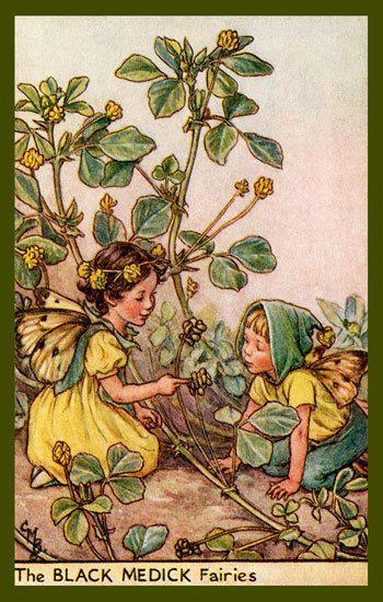 Olde America Antiques | Quilt Blocks | National Parks | Bozeman Montana : Cicely Barker Fairies - The Black Medick Fairy