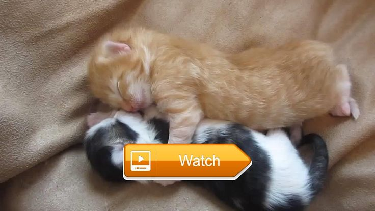 If everyone does not laugh SwearIm Not Human Cats and Dogs Most Hilarious  Died laughing with cute cats and dogs Cats and dogs most hilarious If everyone does not laugh swearIm not human Sources The Funniest Vines Subscribe to  on Pet Lovers