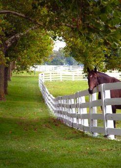 the beauty of the Kentucky horse farm countryside