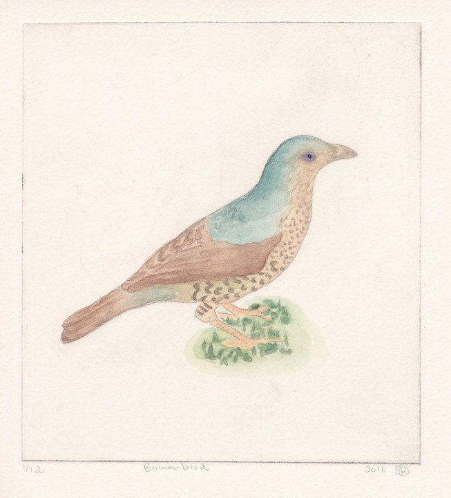 Winter Bower Bird by JessicaParkerArt on Etsy