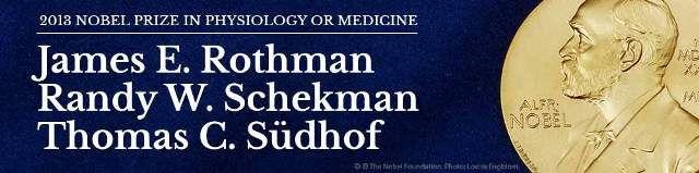 Prêmio Nobel de Medicina 2013: os ganhadores são James Rothman, Randy Schekman e Thomas Südhof | #Células, #Insulina, #íonsDeCálcio, #JamesRothman, #Neurotransmissores, #PrêmioNobelDeMedicina, #Proteinas, #RandySchekman, #ThomasSüdhof, #Vesículas