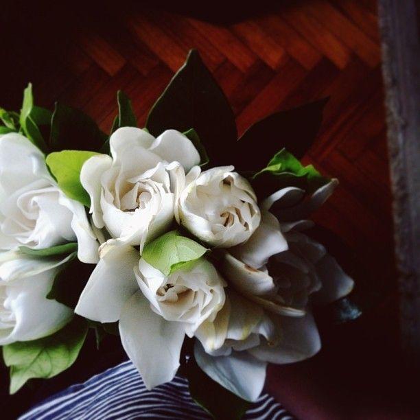 Gardenia Bouquets Flowers Pinterest Gardenias