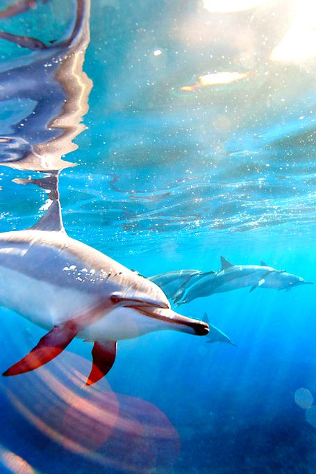 Beautiful Under Sea View of Dolphins   #Information #Informative #Photography
