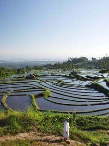 Secret Garden Banyumala River - Singaraja