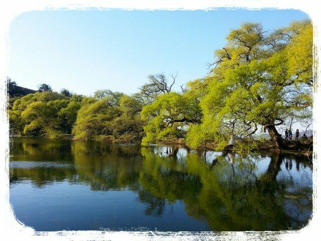 Willow Tree at Bangokji in Gyeongsan