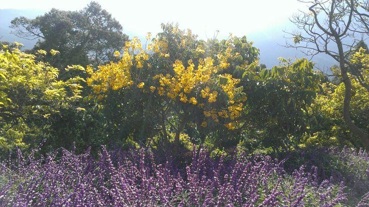 Amarillo - violeta