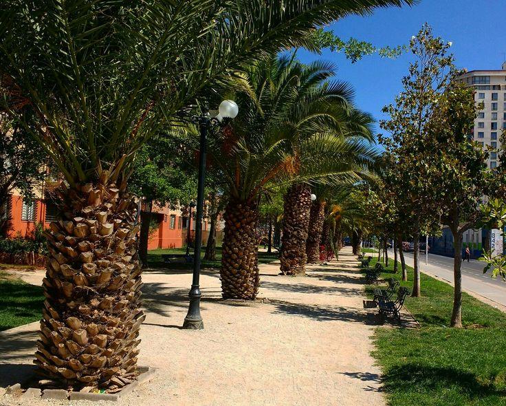 Comunidad Las Palmas