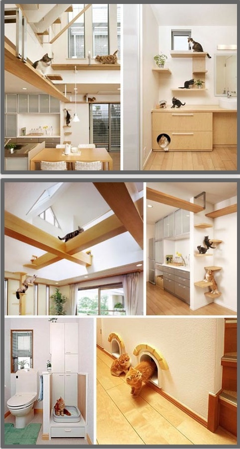 excellent inspiration ideas cool cat houses. This is a pretty neat idea granted I wouldnt have that many cats 49 best Trendy Pet Products images on Pinterest  Cute kittens