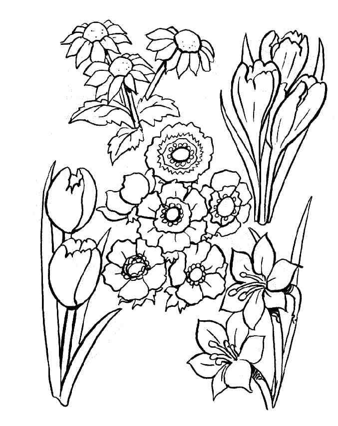 Coloriage Fleur A Imprimer Gratuit.Coloriage Fleur A Colorier Dessin A Imprimer Ecole Des Miracles