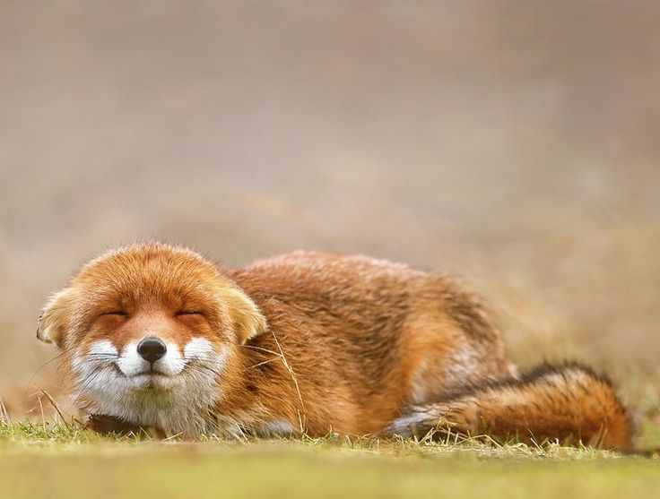"""Photo Series 
