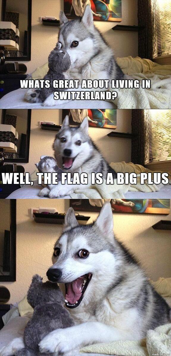 Best 30 Funniest Animals Pictures