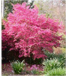 Best 25 Drought Tolerant Trees Ideas On Pinterest