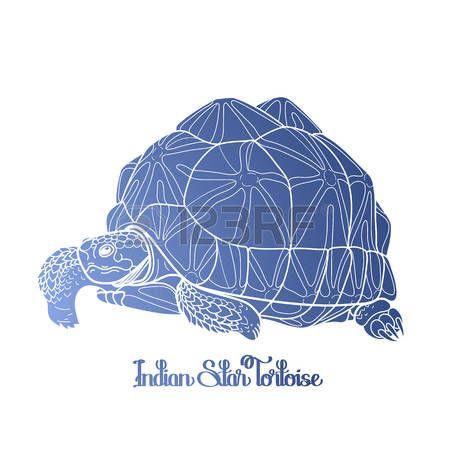 tatuaggio tartaruga: Graphic Geochelone elegans disegnato in stile arte linea isolato su sfondo bianco. Geochelone elegans. Rare pet tartaruga nei colori blu. disegno da colorare pagina del libro
